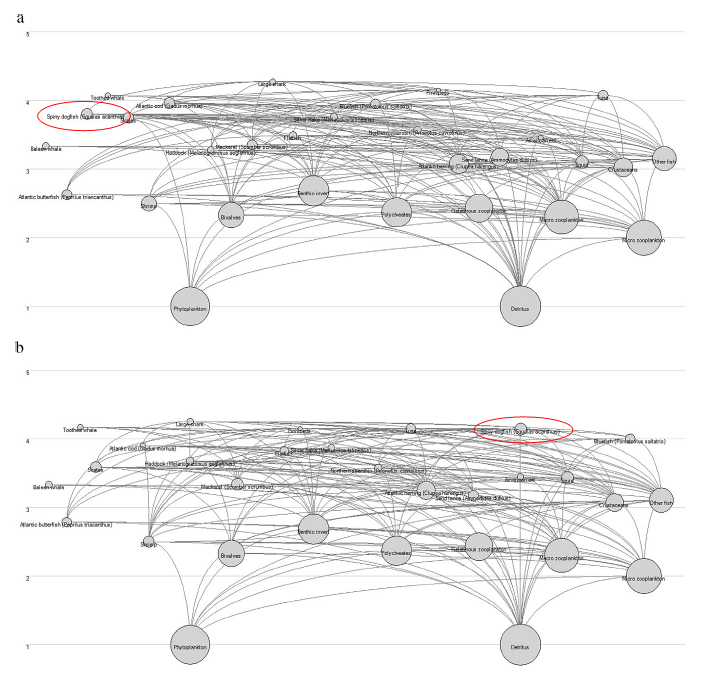 The food web outputs under a.) a depleted spiny dogfish population and b.) recovered spiny dogfish population.  The nodes representing spiny dogfish are circled in red. From Morgan and Sulikowski (2015).